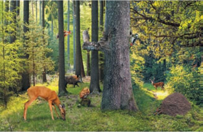 Zwierzęta w lesie